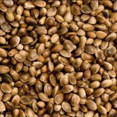 bulk wholesale regular unfeminized hemp seeds cheap colorado pick up