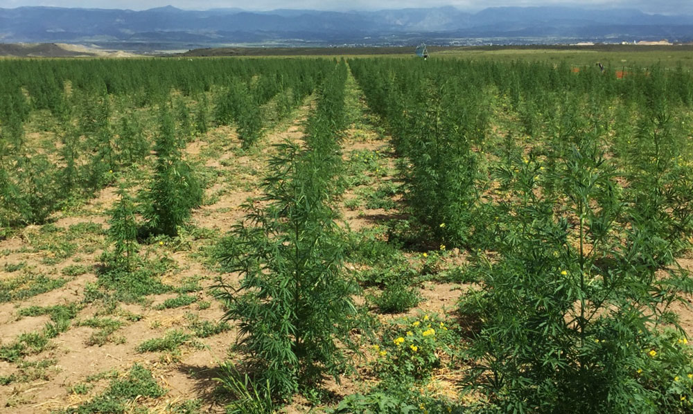 Hemp Farming Futures Contracts - IHF LLC