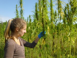 Industrial CBD hemp price per lb is determined by factors such as testing and type.