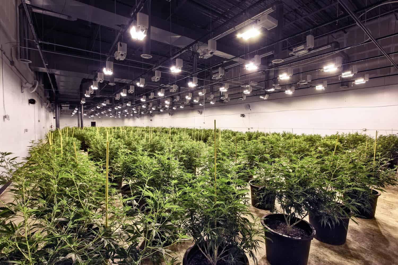 High CBD Hemp Biomass & Flower for Sale in Denver, Colorado