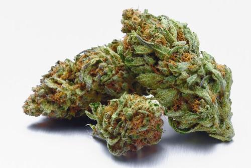 Otto 2 wholesale smokeable hemp flower buds for sale Colorado