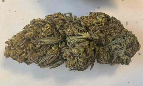 electra strain premium hemp flower