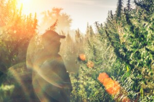 hemp farming futures contracts for cbd hemp field