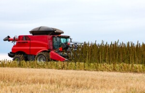 hemp farming contracts for CBD hemp field