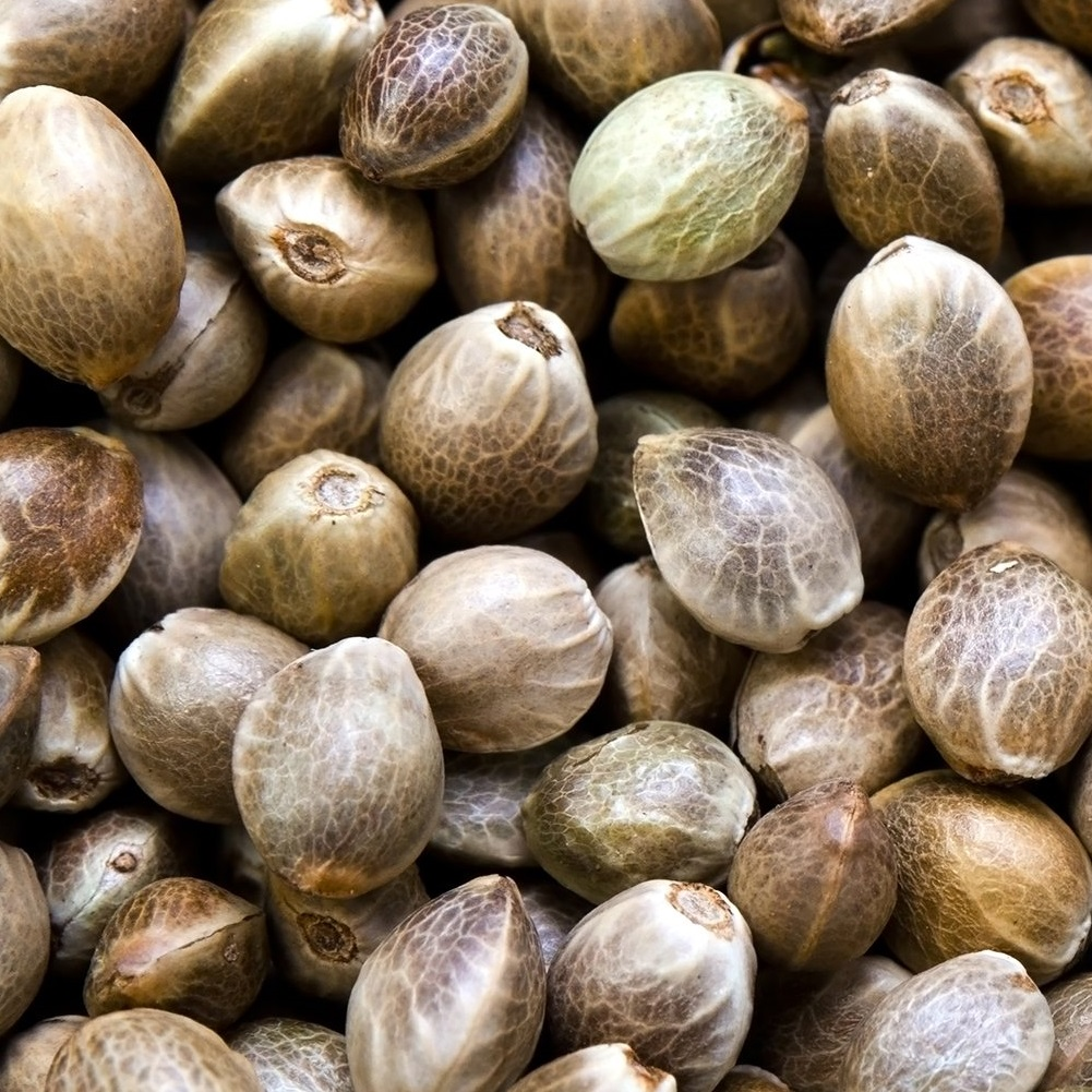 wholesale sweet high cbd hemp seeds feminized colorado