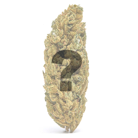 CBD strain sample pack