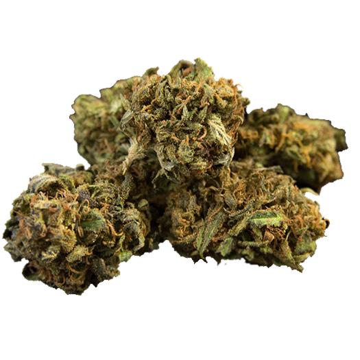 t1 trump strain cbd hemp flower pre roll joints