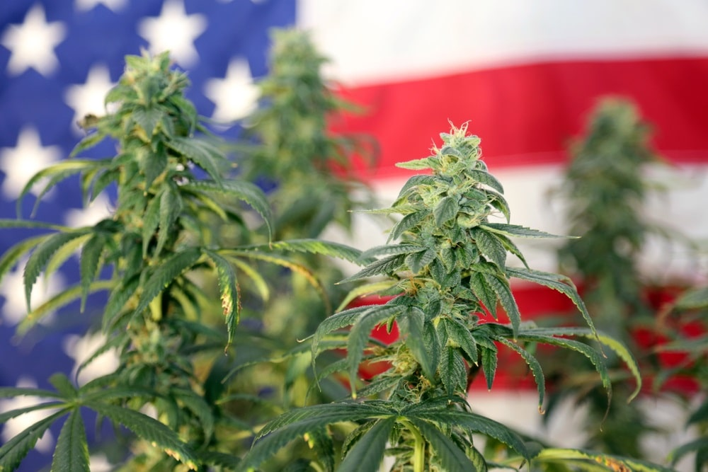 the laws surrounding buying and selling hemp flower after the 2019 farm bill