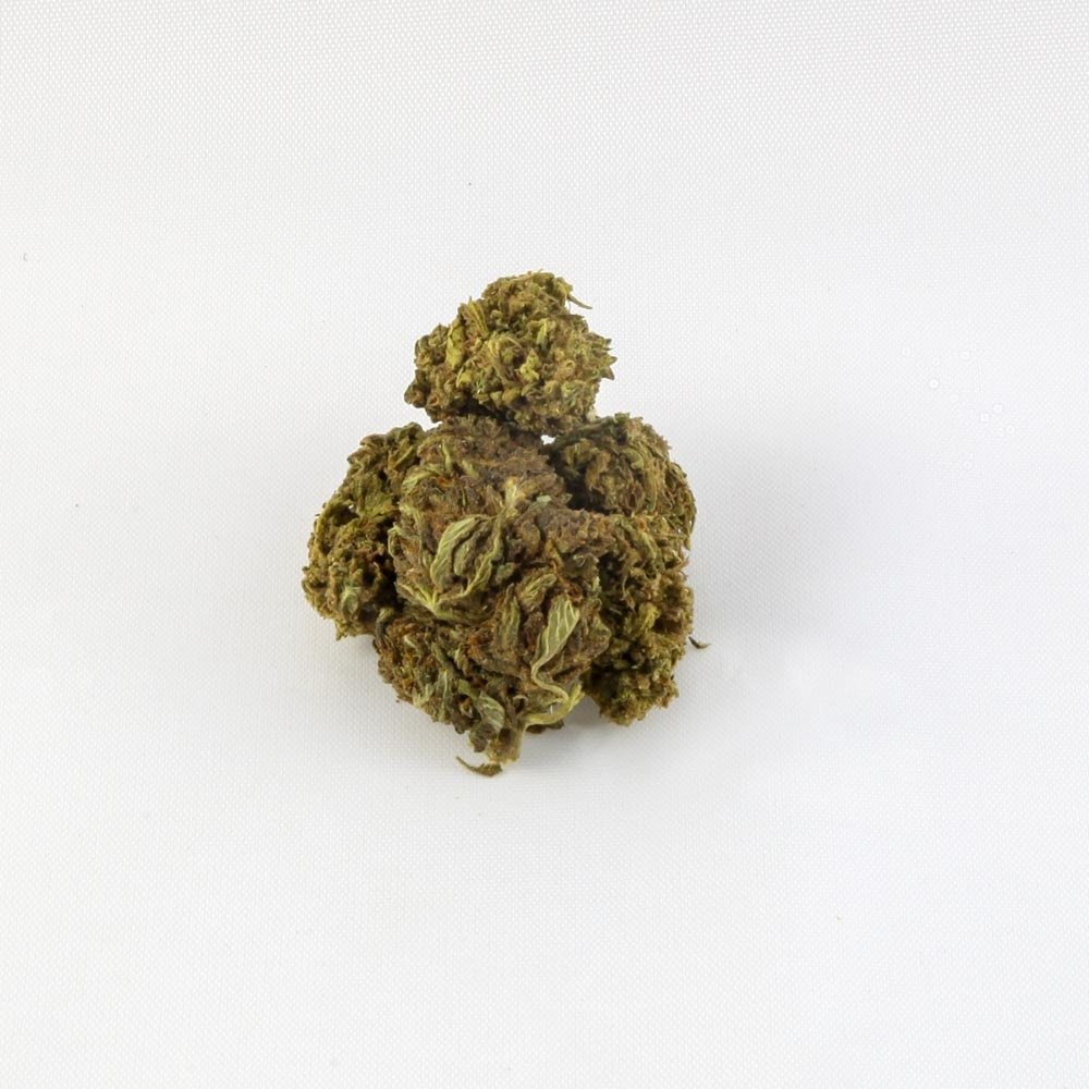 closeup of Harlequin CBD hemp bud