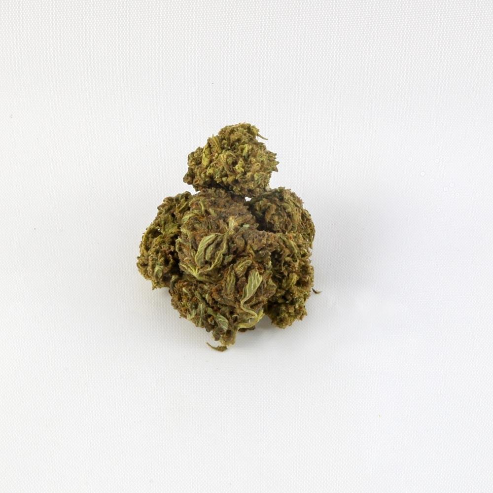 closeup of Harlequin CBD hemp bud