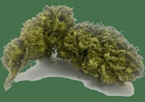 Plain Jane hemp flower otto 2