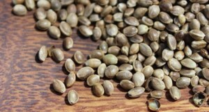 legality of buying and selling hemp seeds in the state of california