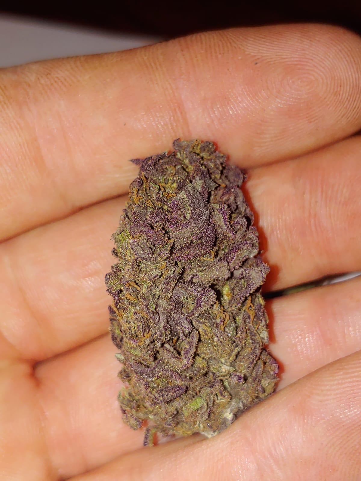 Purple Russian CBD Hemp Flower for Sale