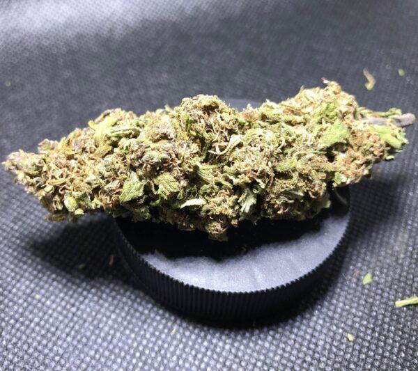 Abacus strain CBD Hemp Flower for Sale Online