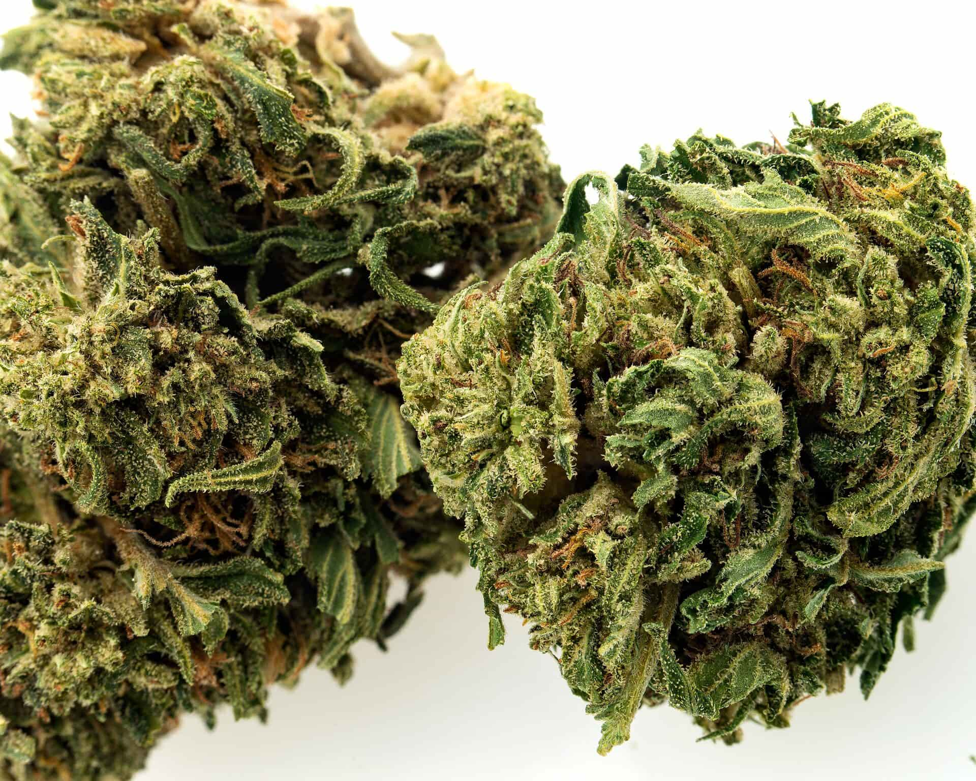 bubba kush cbd hemp flower for sale online