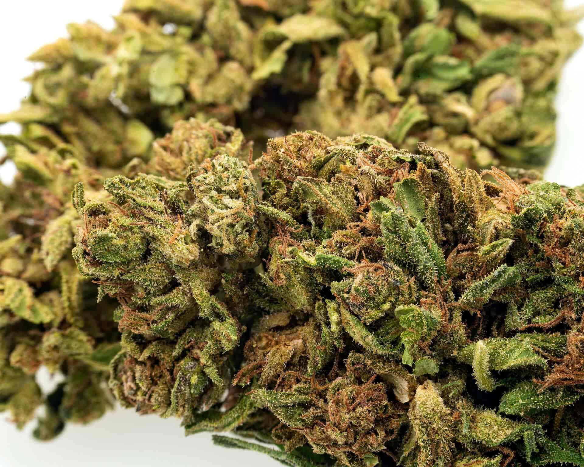 Super Lemon Haze CBD hemp flower for sale online