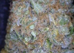 Cherry Pie cannabis flower close up