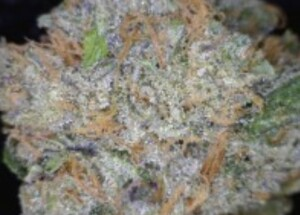 Fruity Pebbles OG cannabis flower close up