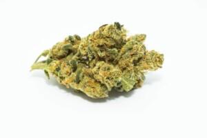 Sherbet cannabis bud