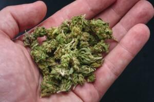 Sour Diesel cannabis bud