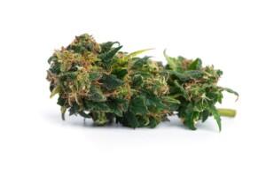 Stormy Daniels cannabis bud