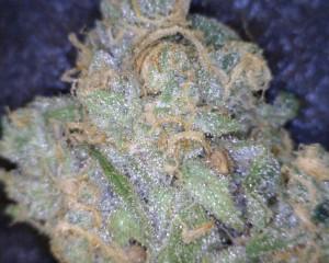 Blue Dream Cannabis flower close up