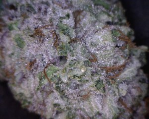 Bubba Kush Cannabis flower close up