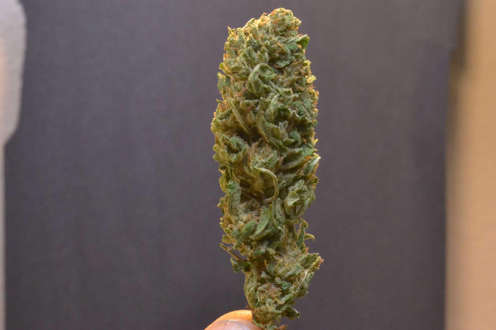 Lifter Cannabis bud