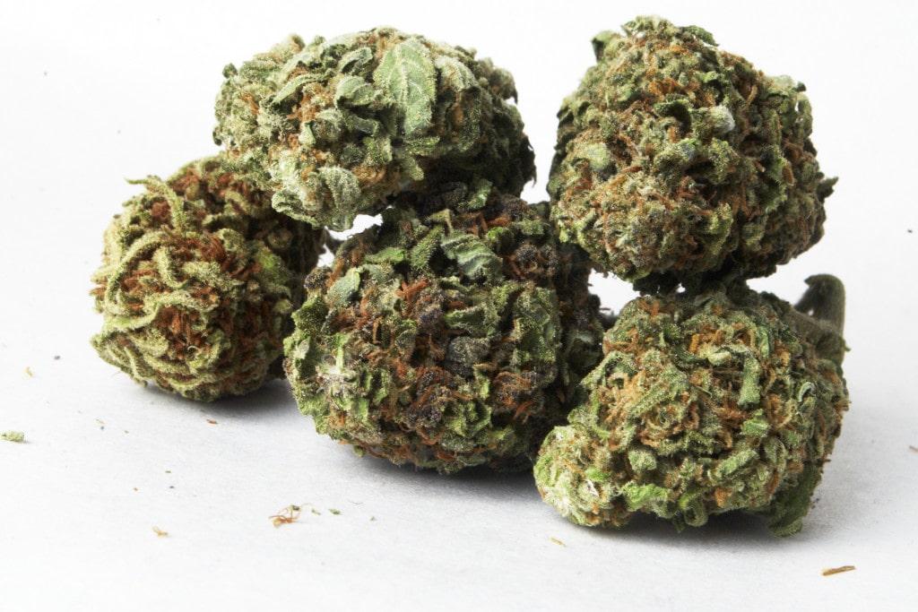 Purple Paralysis Cannabis bud