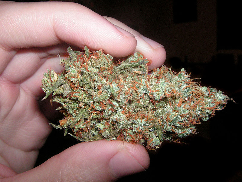 Trainwreck Cannabis bud