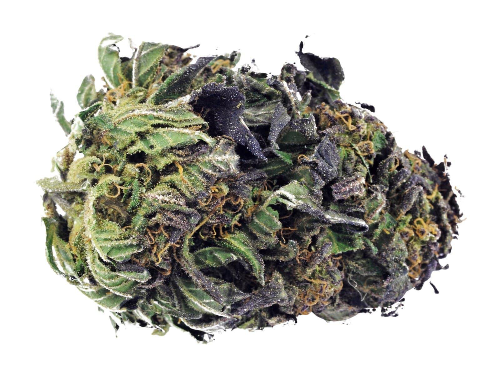 Amnesia Haze Cannabis bud
