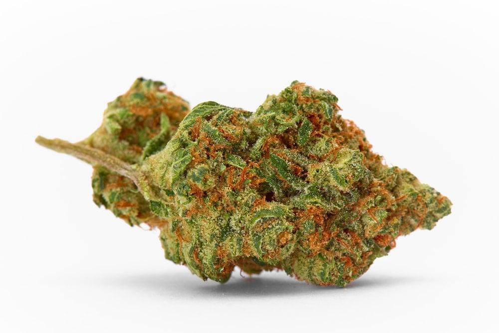 Animal Cookies Cannabis bud