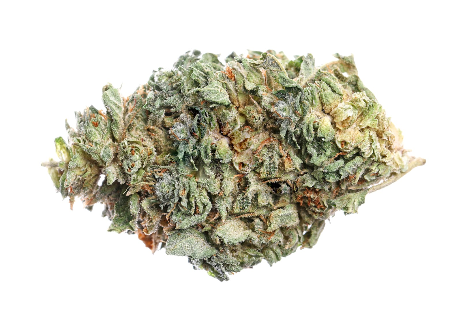 Big Smooth Cannabis bud