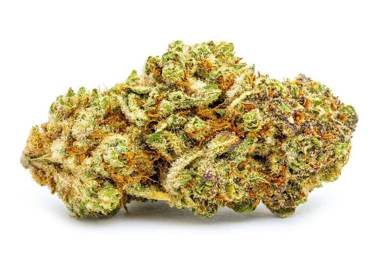 Black Mamba Cannabis bud