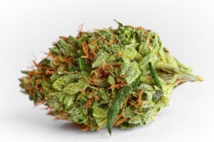 AK47 Cannabis Bud