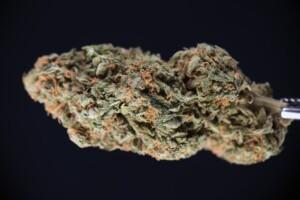 Black Widow Cannabis bud