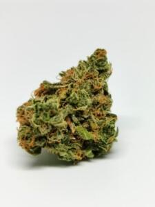 Chocolope Cannabis Bud