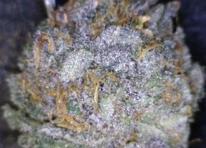 Cornbread cannabis flower closeup