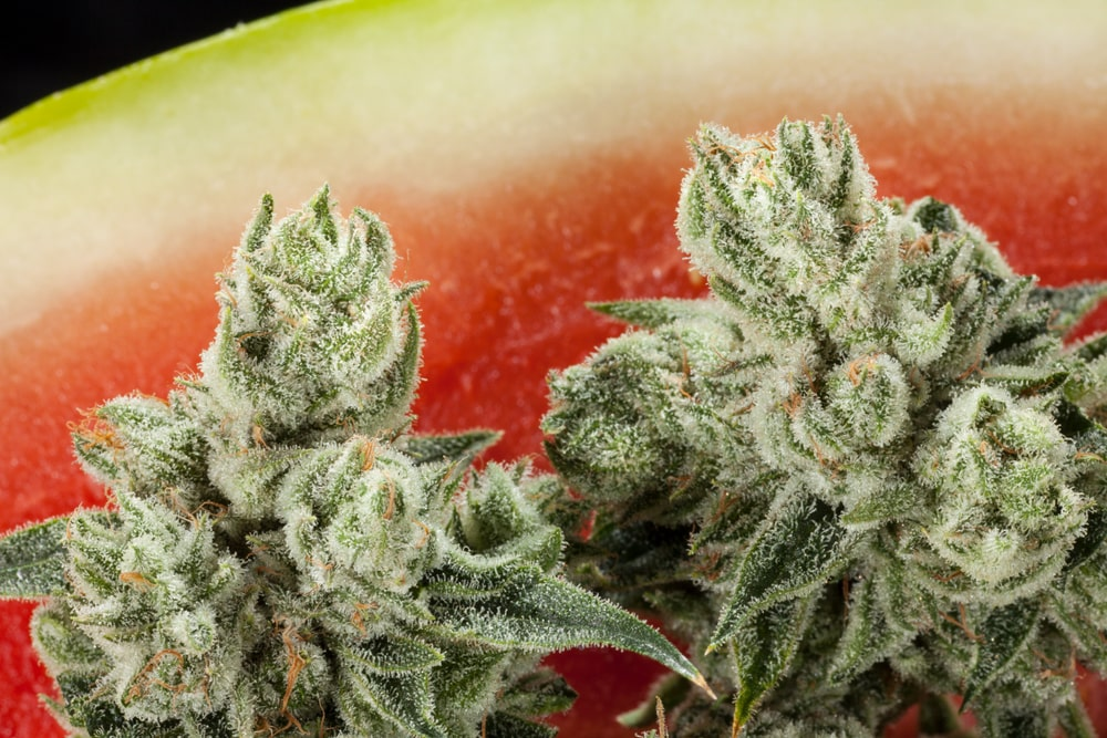 Watermelon Cannabis bud