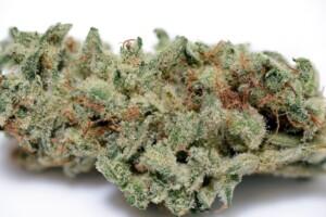 Clementine Cannabis Bud