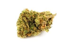 Elmer's Glue Cannabis bud