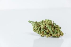 Harlequin Cannabis bud
