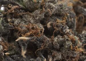 Jet Fuel Cannabis bud