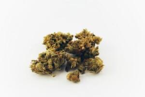 Lemon Skunk Cannabis bud