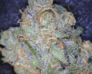 Pinkman Goo Cannabis flower close up