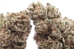 Platinum OG Cannabis bud