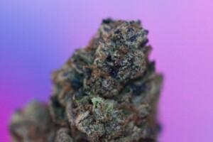 Rainbow Cannabis bud