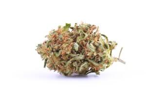 Vanilla Kush Cannabis bud