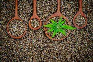 hemp flower pennsylvania