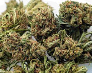 umpqua CBD hemp flower for sale online